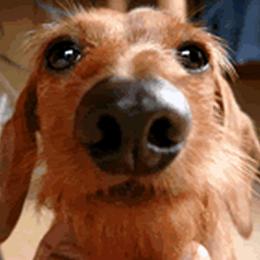 愛犬チビの画像